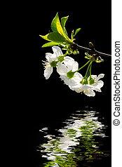 eau, blanc, refléter, fleurs