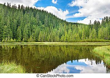eau bleue, dans, a, forêt, lac