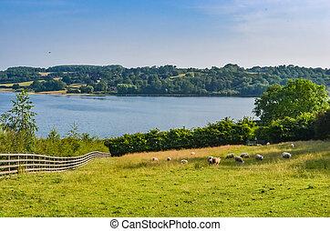 eau bleue, herbe, rutland, grand, leicestershire., ciel, vert, réservoir, arbres.