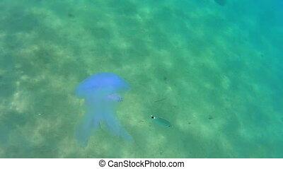 eau bleue, mort, méduse