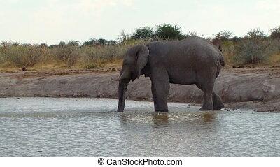 eau, boue, waterhol, jouer, éléphant