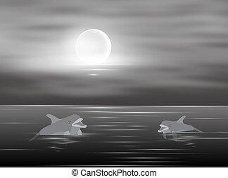 eau, clair lune, deux, nager, vecteur, illustration, dauphins