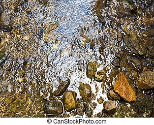eau claire, dans, les, forêt, rivière