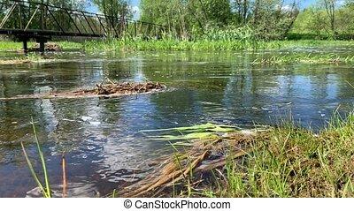eau claire, forêt, calme, côte, reflet, courant, chant, algues, eau, vert, oiseaux, soleil herbe, lot, somewhere, rivière, calme