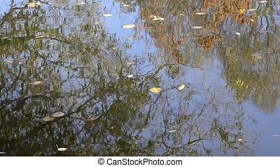 eau, facilement, feuilles, étendue, automne, écoulement,...