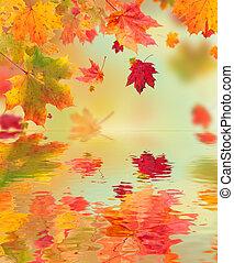 eau, feuilles automne, érable, surface