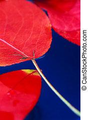 eau, feuilles, automne