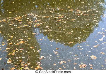eau, feuilles, baissé