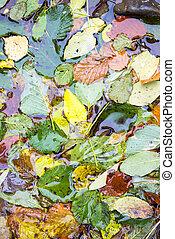 eau, feuilles, baissé, surface