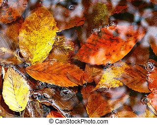 eau, feuilles feuillage caduc