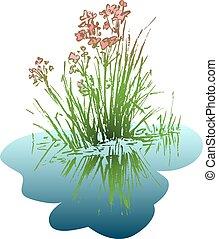 eau, feuilles, fleur, reflété