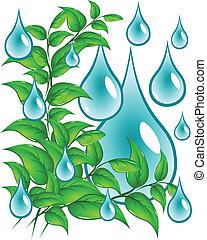 eau, feuilles, gouttes, vert