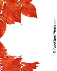 eau, feuilles, refléter, fond