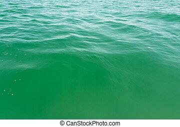 eau, fin, vert, haut