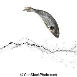 eau, fish, sauter, basse, mer