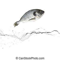 eau, fish, sauter, brème, mer