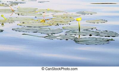 eau, fleurs