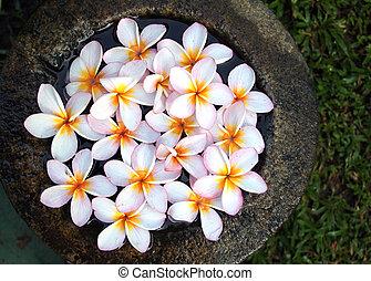 eau, fleurs, plumeria