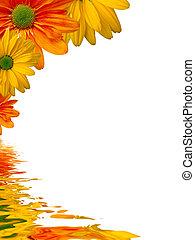 eau, fleurs, refléter, fond