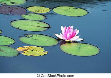 eau, flore