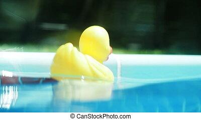 eau, flotter, canard, caoutchouc, surface