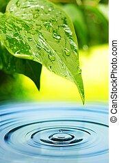 eau, frais, feuilles, vert, reflété
