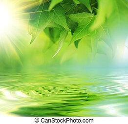 eau, frais, feuilles, vert, sur