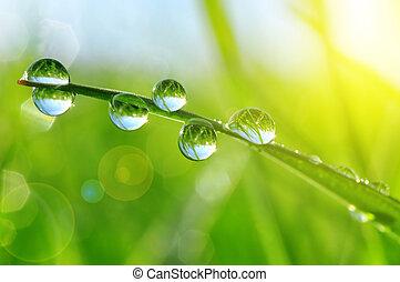 eau, frais, gouttes, herbe verte