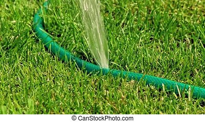 eau, fuite, endommagé, tuyau, jardin