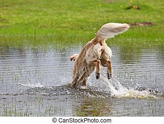 eau, grand, sauter, chien