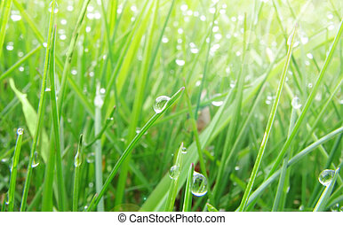 eau, herbe pelouse, vert, rosée