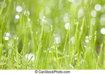eau, herbe, vert, gouttes