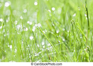 eau, herbe, vert, rosée