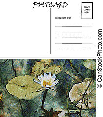 eau, image, lilly, gabarit, vide, vide, carte postale