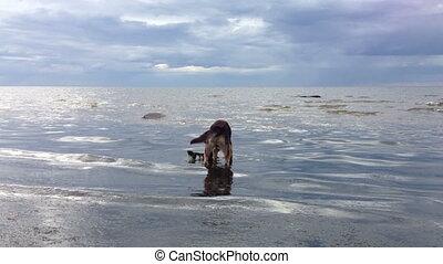 eau, jouer, chien, crosse