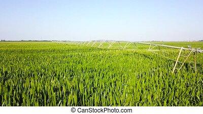 eau, machinerie, champ, irrigation, maïs