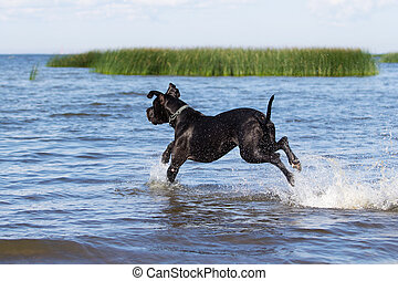eau, mer noire, mastiff, course