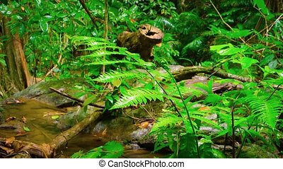 eau, mouillé, feuilles, égouttement, pluie, rainforest, après
