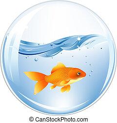 eau, or, balle, fish