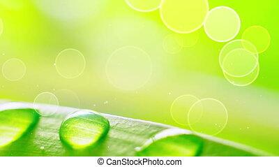eau, pendant, herbe, vent, gouttes