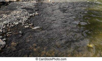 eau, peu profond, clair, stones., rivière, montagne