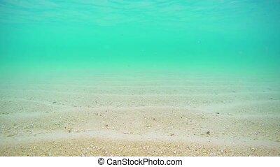 eau, plage, exotique, peu profond, maldives