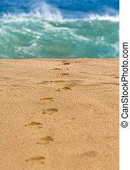 eau, plage, pas, sablonneux