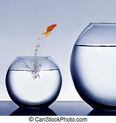 eau, poisson rouge, sauter, dehors
