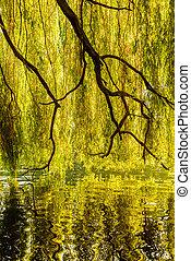 eau, réflexion arbre