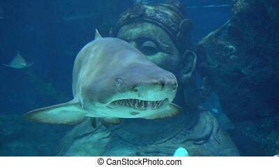 eau, requin
