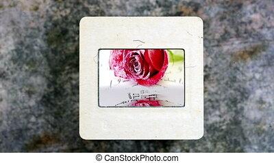 eau, rose, refléter, rouges