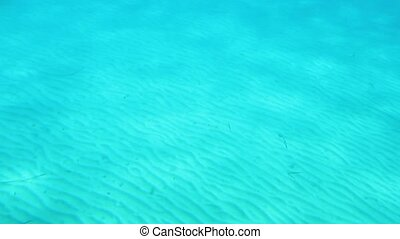 eau, sous-marin, peu profond