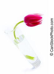 eau, tulipe, verre