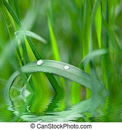 eau, vert, goutte, herbe